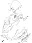 COWLING BODY GSF1200 2003-05